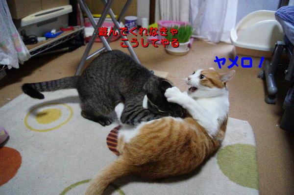 20170524 DSC07387 カンペイvsさくら.jpg