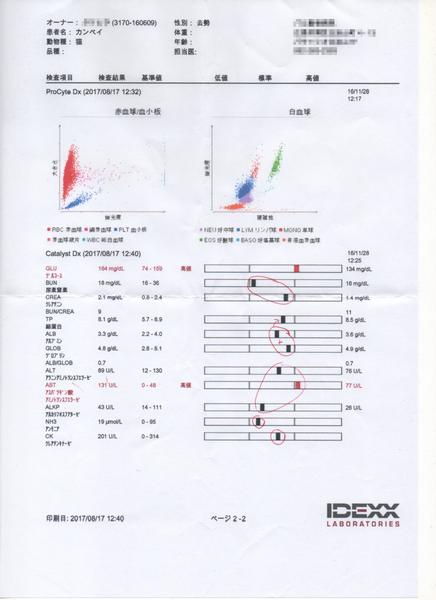 20170817 カンペイ (2)血液検査.png