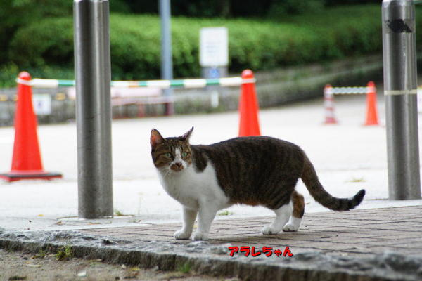 DSC00134 アラレ.jpg