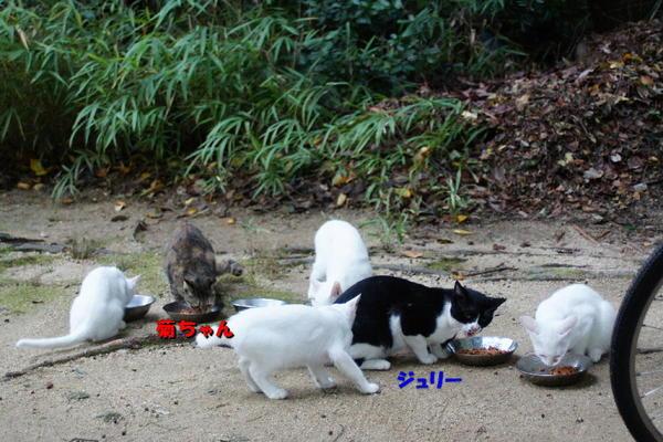 DSC00146 ジュリー、菊ちゃんと子猫達.jpg