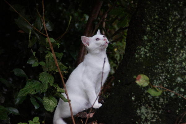 DSC00155 ユミの子猫.jpg