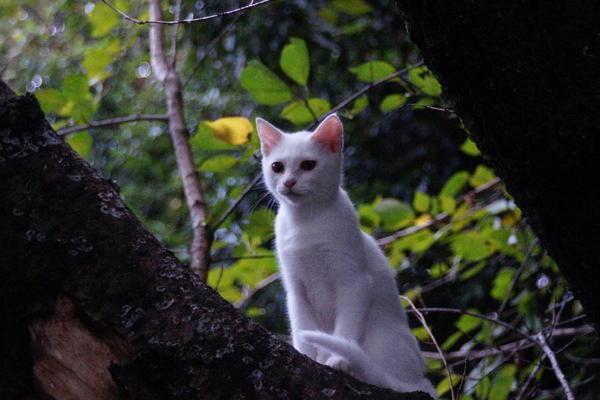 DSC00158 ユミの子猫.jpg