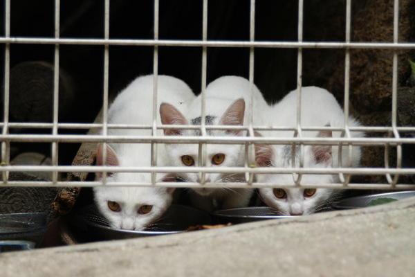 DSC00182 ミルクの子猫.jpg