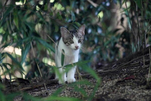 DSC00308 エリコの子猫.jpg