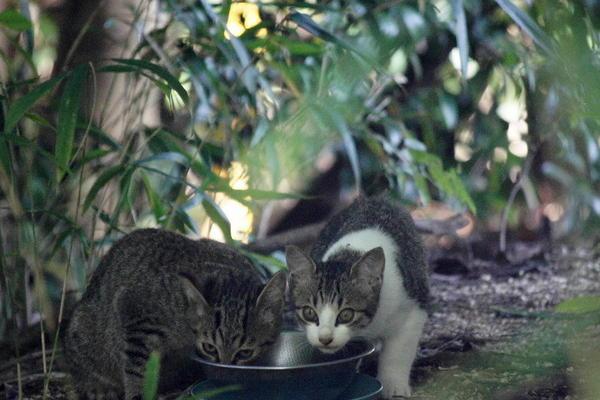 DSC00313 エリコの子猫.jpg