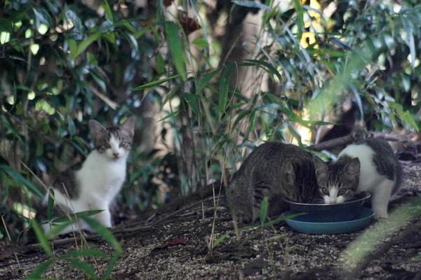DSC00321 エリコの子猫.jpg