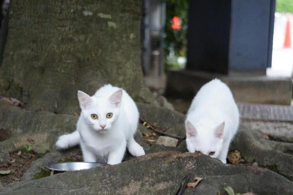 DSC00710 ユミの子猫.jpg