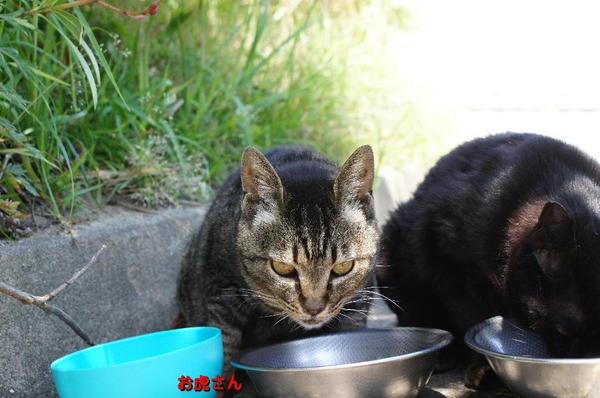 DSC00759 お虎さん.jpg
