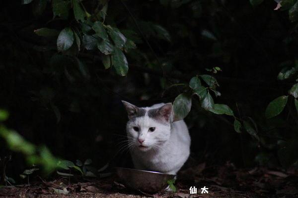 DSC00948 仙太.jpg