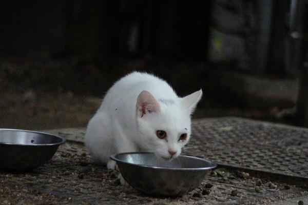 DSC00970 ユミの子猫.jpg