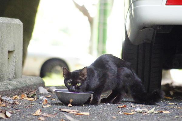 DSC01209 黒猫.jpg