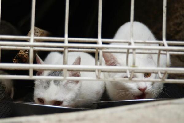 DSC01749 ミルクの子猫.jpg