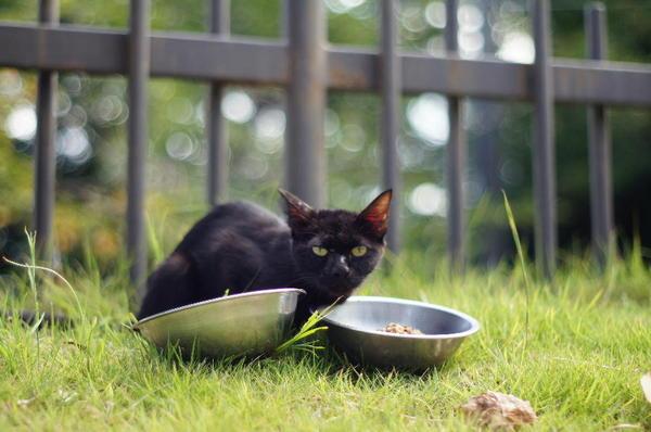 DSC01766 黒猫.jpg