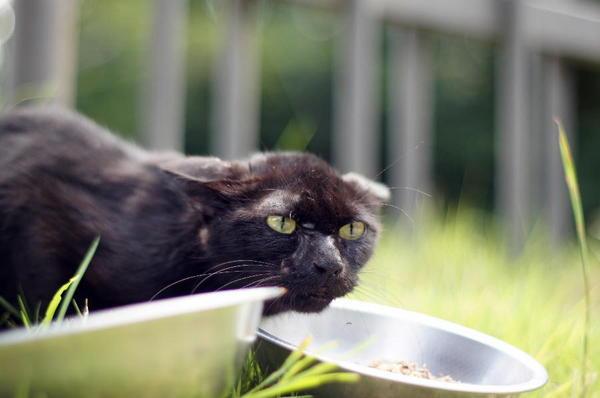 DSC01780 黒猫.jpg