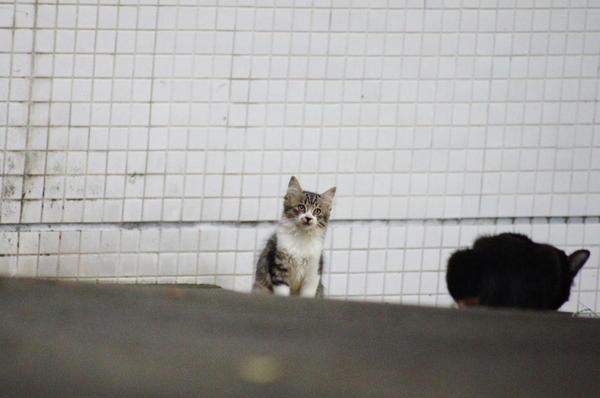 DSC01913 仔猫1.jpg