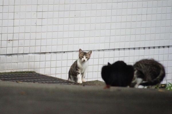 DSC01921 仔猫2.jpg