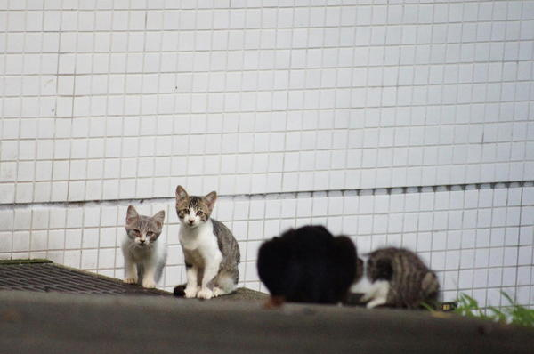 DSC01927 仔猫3.jpg