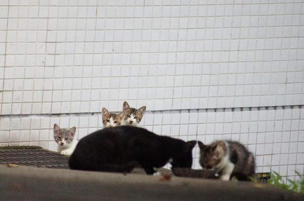 DSC01959 仔猫4.jpg