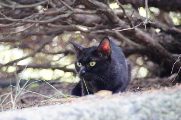 DSC02156 黒猫.jpg