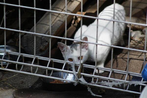 DSC02316 ミルクの子猫.jpg