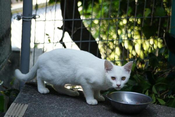 DSC02621 ミルクの子猫.jpg