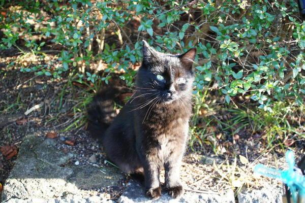 DSC02818 オハギの子猫.jpg