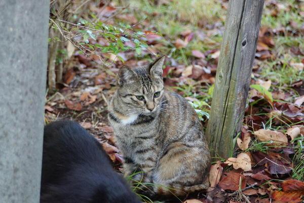 DSC02828 オハギの子猫.jpg