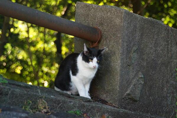 DSC02856 カモメの子猫.jpg