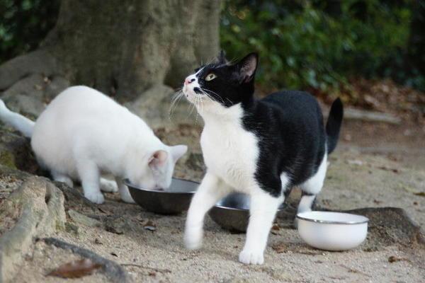 DSC02877 ウランの子猫.jpg