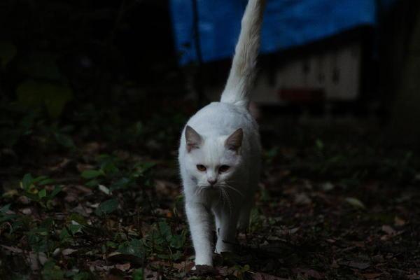 DSC02886 ミルクの子猫.jpg
