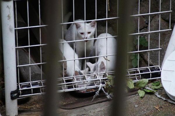 DSC02895 ミルクの子猫.jpg