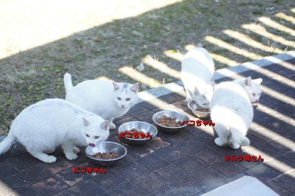 DSC02908 ミルクの家族.jpg