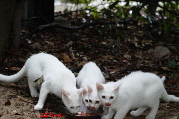 DSC02936 ユミと子猫達.jpg