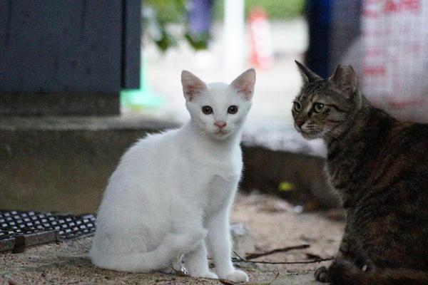 DSC02943 ユミの子猫.jpg
