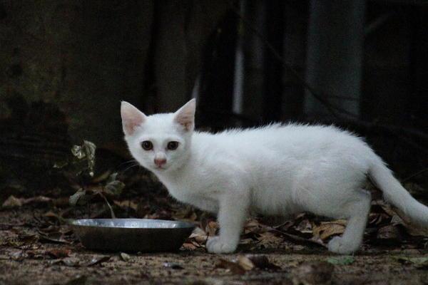 DSC02959 ユミの子猫.jpg