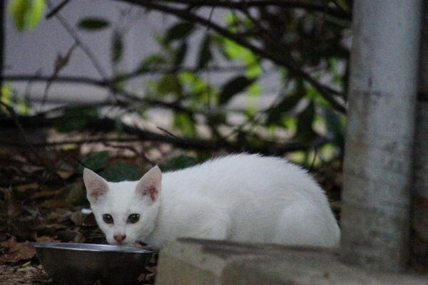 DSC02968 ユミの子猫.jpg