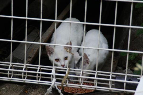 DSC03148 ミルクの子猫.jpg
