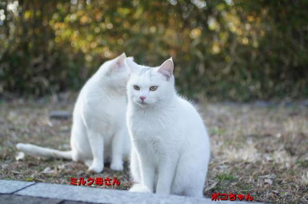 DSC03159 ミルクとボコちゃん.jpg