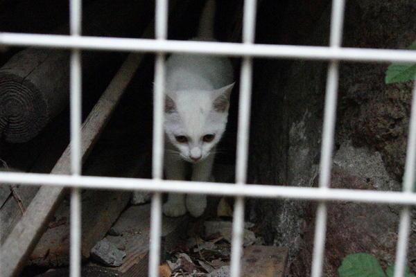 DSC03350 ミルクの子猫.jpg