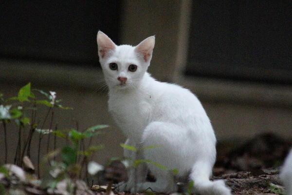 DSC03385 ユミの子猫.jpg