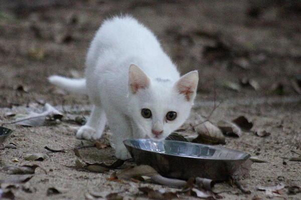 DSC03393 ユミの子猫.jpg
