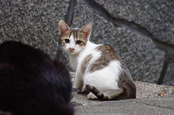 DSC03418 子猫.jpg