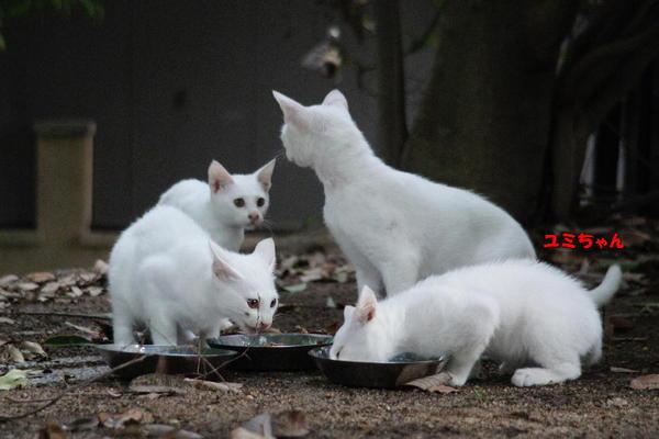 DSC03649 ユミと子猫.jpg