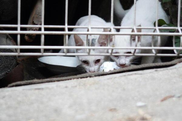 DSC03665 ミルクの子猫.jpg