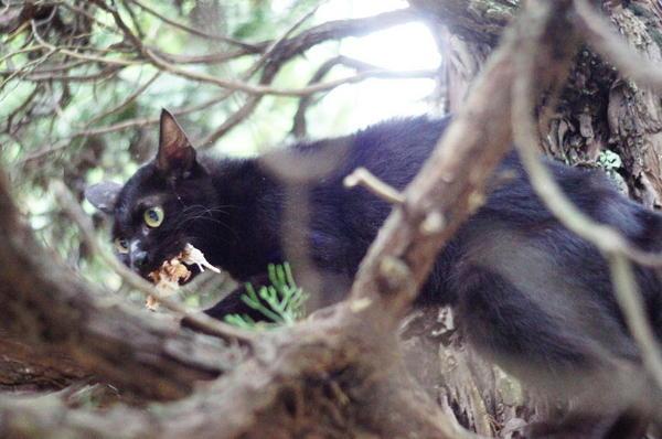 DSC03668 黒猫.jpg