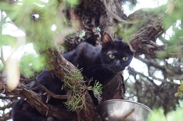 DSC03674 黒猫.jpg