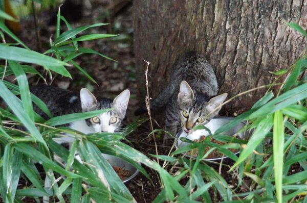 DSC03742 子猫.jpg
