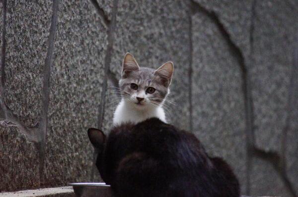 DSC03762 子猫.jpg