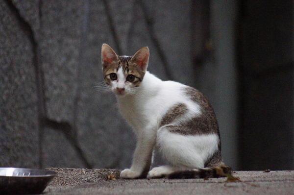 DSC03801 子猫.jpg