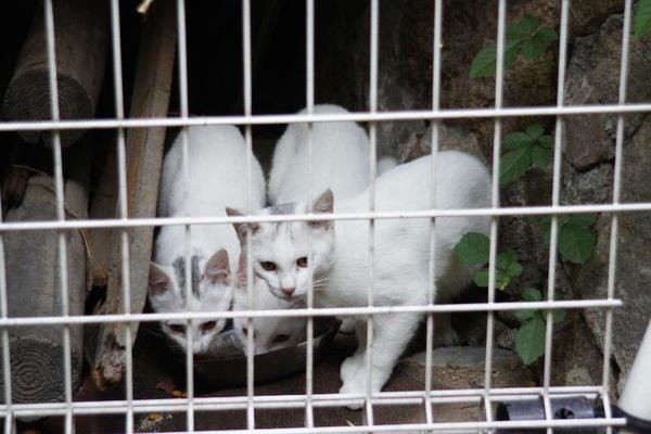 DSC04058 ミルクの子猫.jpg